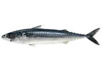 How long to boil mackerel
